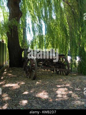 Antike Wagen unter einem schönen alten Willow Tree - Stockfoto