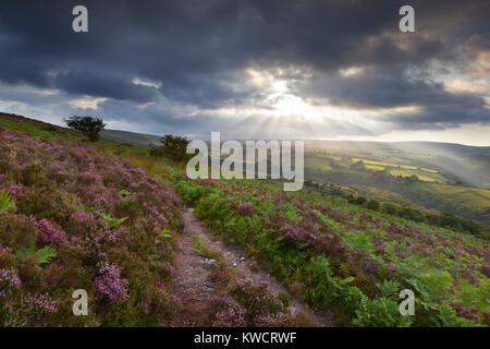 EXMOOR NATIONAL PARK, Somerset, England: Sonnenuntergang über Heather clad Exmoor in Richtung Cloutsham - Stockfoto