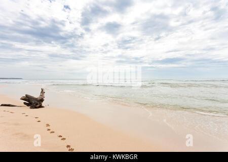 Asien - Sri Lanka - induruwa - ein riesiger Stumpf am Strand - Stockfoto
