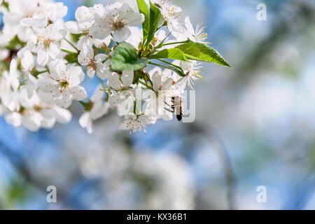 Baum, fliegen, Insekten, Tiere, Zweig, Bienen, Bienenstock, Trennung ...