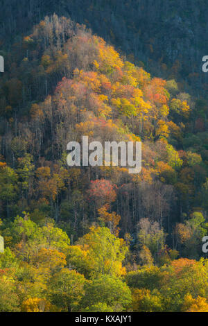 Anfang Herbst, Great Smoky Mountains NP, TN, USA, von Bill Lea/Dembinsky Foto Assoc - Stockfoto