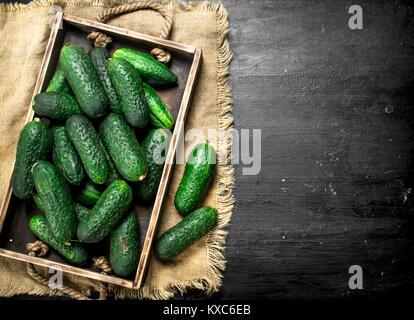 Frische Gurken in einem Holz- Fach auf einer schwarzen Tafel. - Stockfoto