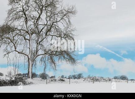Bare winter baum im Schnee in die Landschaft von Cotswold. Cotswolds, Gloucestershire, England - Stockfoto