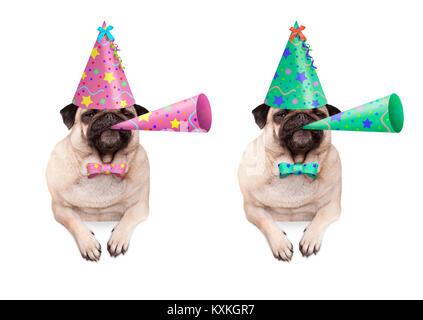 Adorable mops Welpe Hund hängen mit Pfoten auf leeren Banner, tragen bunte Geburtstag hat und blasen Horn, auf weißem - Stockfoto