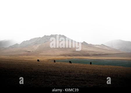 Mongolei Winter Lake Snowy Mountains bewölkt Rinder Kühe wiesen Steppen foggy Mongolische - Stockfoto