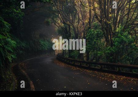 Straße in Magic nebligen Wald von Anaga ländlichen Park, Teneriffa, Kanarische Inseln, Spanien - Stockfoto