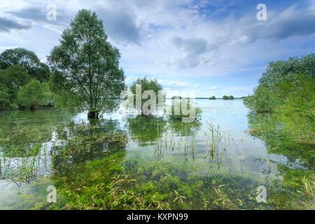 Frankreich, Aube (10), Champagner, Parc naturel régional de la Forêt d'Orient, Lac d'Orient // Frankreich, Calvados, - Stockfoto
