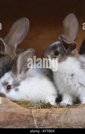 Berühmt Textur Draht Kaninchen Zeitgenössisch - Die Besten ...