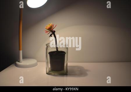 Sukkulente Pflanze unter eine Tischlampe - Stockfoto
