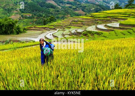 Junge Frau, die ihr Baby tragen während der Arbeit auf die Reisterrassen in Hoang Su Phi, Ha Giang Provinz, in der - Stockfoto