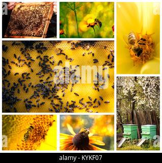 Biene Leben landwirtschaftliche Collage aus mehreren Bildern - Stockfoto