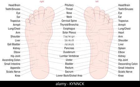 Fuß-Reflexzonenmassage Abbildung Diagramm Stockfoto, Bild: 143083166 ...