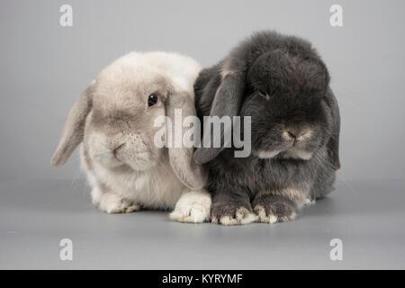 Bunny Rabbits, Großbritannien - Stockfoto