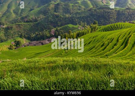 Wunderschöne Aussicht auf das Dorf und die umliegenden Dazhai Longsheng Reisterrassen in der Provinz Guangxi in - Stockfoto