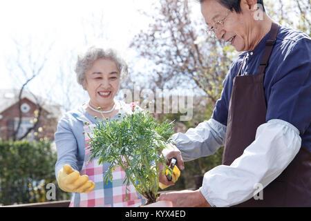 Das alte Paar wachsen Blumen im Garten - Stockfoto