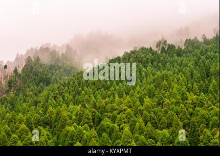 Wald im Naturschutzgebiet des Pico da Vara auf Sao Miguel, Azoren. - Stockfoto