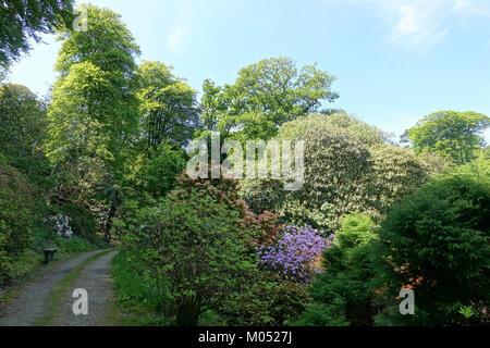 Caerhayes Schloss Gärten - Cornwall, England - DSC 02926 - Stockfoto