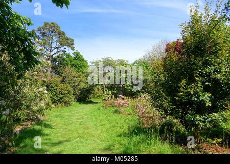 Caerhayes Schloss Gärten - Cornwall, England - DSC 03108 - Stockfoto