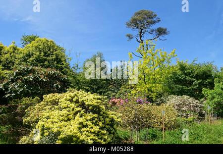 Caerhayes Schloss Gärten - Cornwall, England - DSC 03164 - Stockfoto