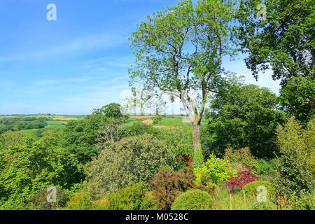 Caerhayes Schloss Gärten - Cornwall, England - DSC 03216 - Stockfoto