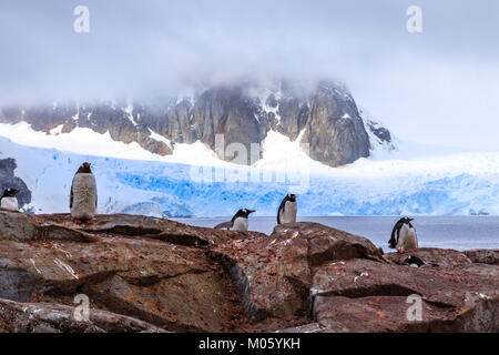 Felsige Küste mit Flock von Gentoo pengins und Rock mit blauen Gletscher im Hintergrund an Peterman Island, Antarktische - Stockfoto