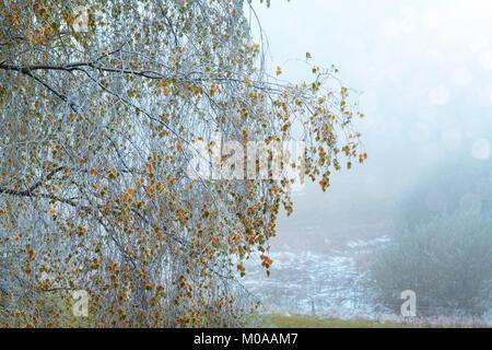 Das Ende der Herbst und der erste Schnee im Winter, Kampagne, Frankreich - Stockfoto