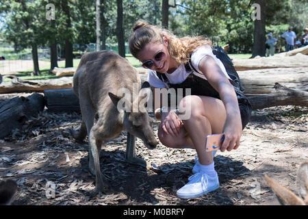 Junge Frau nimmt selfie mit Känguruh im Brisbane Koala Sanctuary - Stockfoto