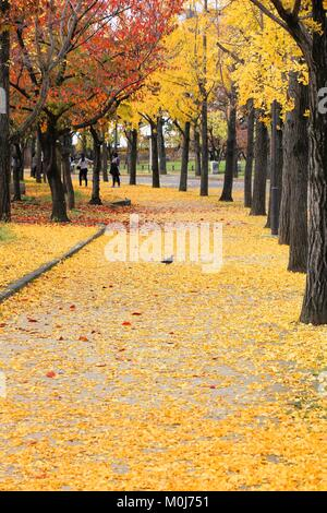 Ginkgo Bäume Blätter im Herbst in Osaka Castle Park, Japan. - Stockfoto