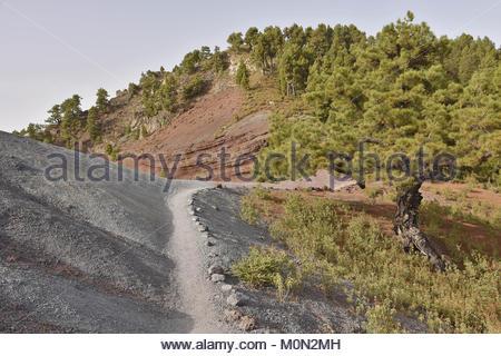 Ruta de la Cresteria Wanderweg durch die Caldera de Taburiente National Park, vulkanische Landschaft mit Pinien - Stockfoto