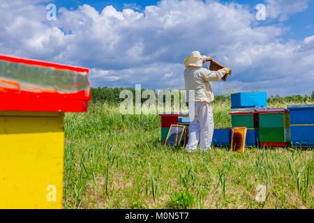 Imker hält Holzrahmen mit Bienen Situation im Bienenvolk zu steuern. - Stockfoto