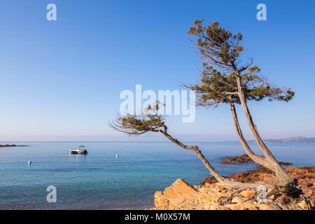 Frankreich, Korsika, Porto Vecchio, Strand von Palombaggia - Stockfoto