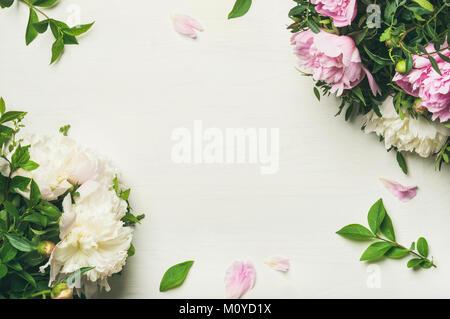 Frühling Blumen Layout mit Blumen. Flachbild-lay von zart rosa und weißen Pfingstrosen auf weißem Hintergrund, Ansicht - Stockfoto