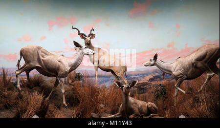 Natural History Museum in Los Angeles County California Amerika USA - Stockfoto