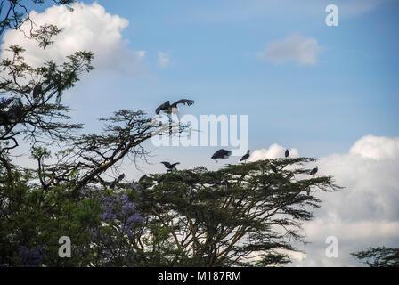 Marabu in Nairobi Kenia Afrika - Stockfoto