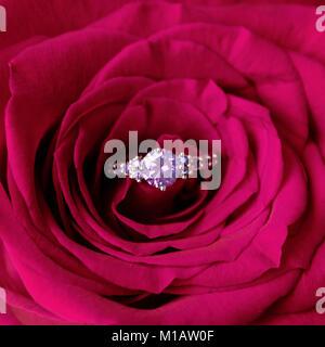 Sekt Verlobungsring innerhalb der roten Rose. Romantisches Geschenk zum Valentinstag. Heiratsantrag Konzept - Stockfoto
