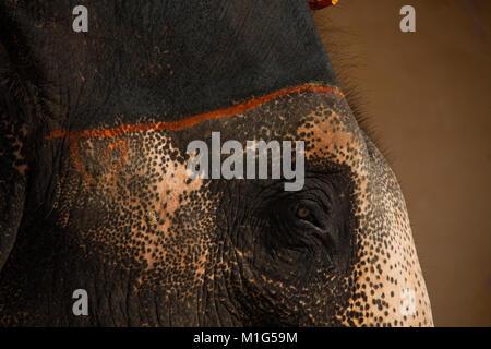 Traurig Suche malte Elefantenreiten im Amber Fort, Jaipur, Rajasthan, Indien, - Stockfoto