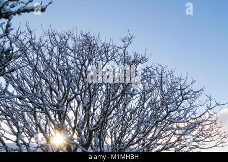 Sonne scheint durch die Äste im Schnee - Stockfoto