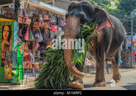 Pinnawala Elefanten Waisenhaus, Kärnten Provinz, Sri Lanka, Asien - Stockfoto