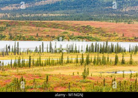 Die Susitna River Valley und Höhepunkt im Herbst Farben und Fichte Bäume auf dem Denali Highway in Alaska Yunan. - Stockfoto