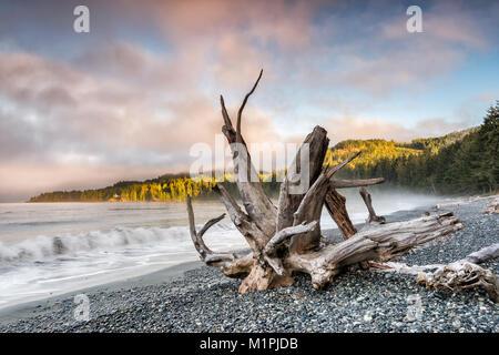 Wellen, Treibholz am Pacific Pebble Beach, Nebel bei Sonnenuntergang, Französisch Beach Provincial Park, Southern - Stockfoto