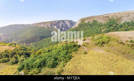 Luftaufnahme von Sonnenblumen Feld zur Ernte bereit. Drone Schoß des Berges Seite mit einer Schlucht, Wald, Hügel - Stockfoto