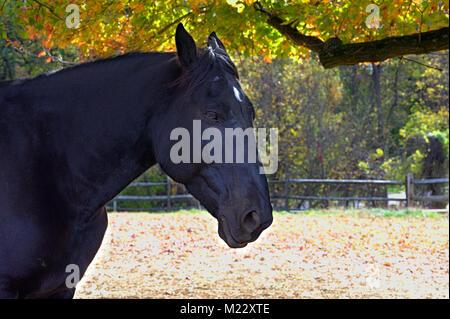 Pferd Kopf geschossen - Stockfoto