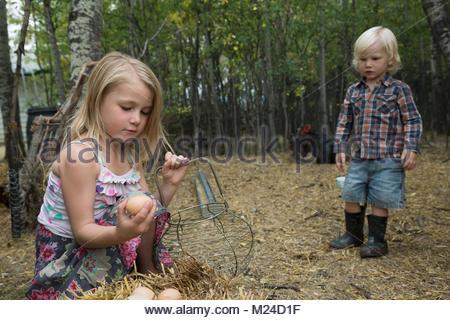Neugierig, blond Bruder und Schwester sammeln frische Eier - Stockfoto