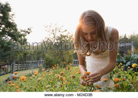 Junge Frau Blumen pflücken im ruhigen Garten - Stockfoto