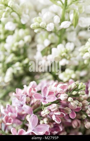 Makro Bild der Feder Violett und Weiß lila Blumen, abstrakte Soft ...