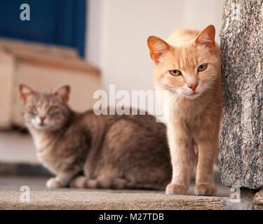 Cat Peering um Mauer auf die griechische Insel - Stockfoto