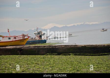 Fischerboote im Hafen mit Algen in Chile gefüllt - Stockfoto