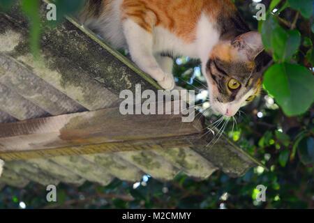 Katze Jagd auf der Dachterrasse - Stockfoto