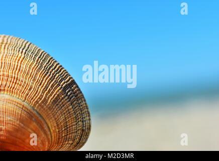 Orange Muschel mit unscharfen Hintergrund bei Ventura State Beach Kalifornien - Stockfoto