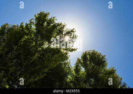 Sunburst durch die Tress in Rom, Italien - Stockfoto